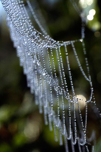 Closeup photo of a spider web laden with drops of dew on a cold autumn morning.