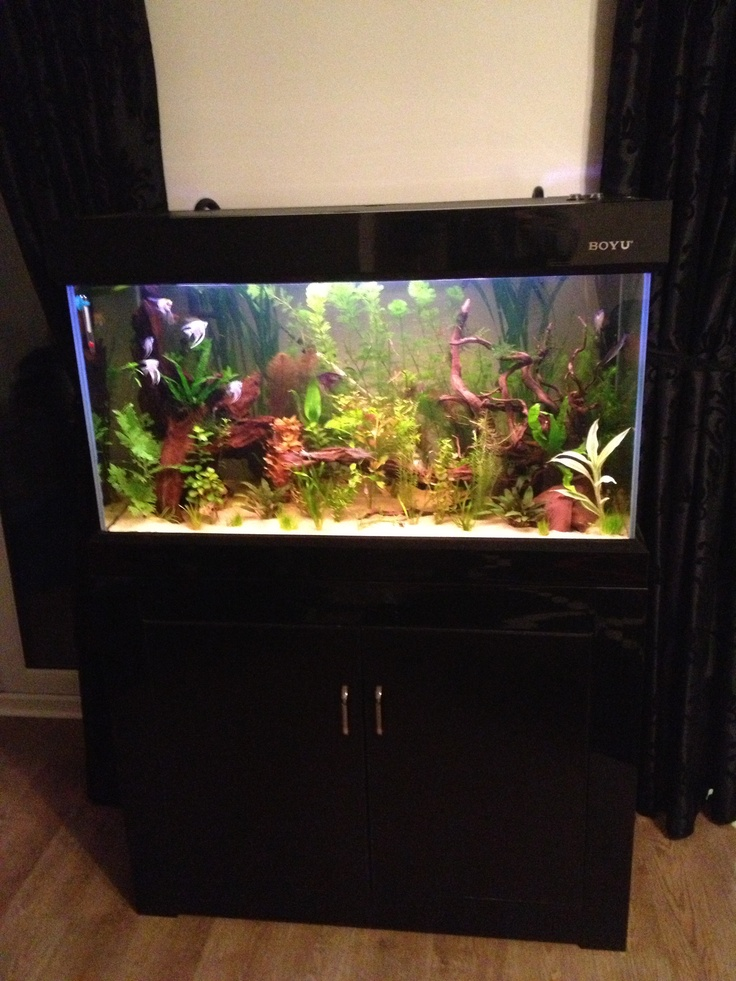 Our customer's beautiful Boyu fish tank!    http://www.allpondsolutions.co.uk/aquarium-1/fish-tanks/cabinet-aquarium-fish-tanks/modern-cabinet-fish-tank-aquarium-230-litres-3ft-two-colours-6995.html