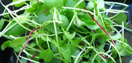 8 Tips for Growing A Greenhouse Organic Vegetable Garden | Organic Authority