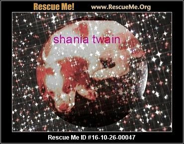 ― Pennsylvania Brittany Rescue ― ADOPTIONS ―RescueMe.Org