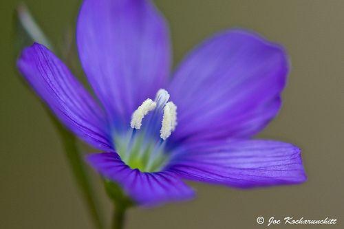 Very tiny purple flower :)