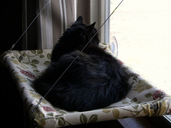 screened cat house the 25 best cat window ideas on pinterest cat hammock cat room