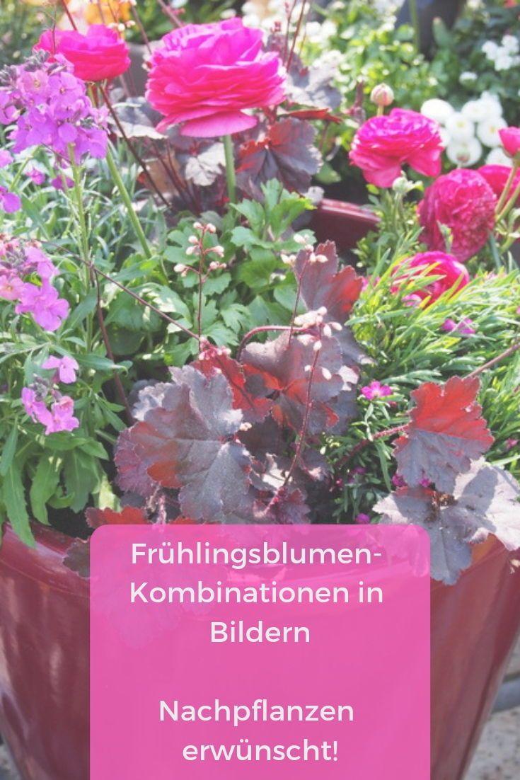 Fruhlingsblumen Ideen Fur Balkonkasten Und Pflanzgefasse