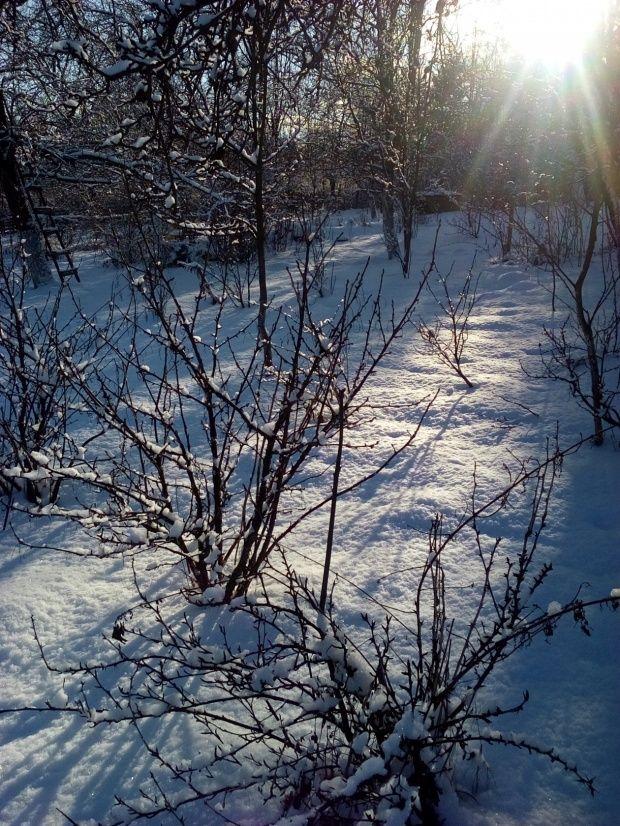 Zima w Polsce/Winter in Poland, Natura 15 239 (autor: jlez)