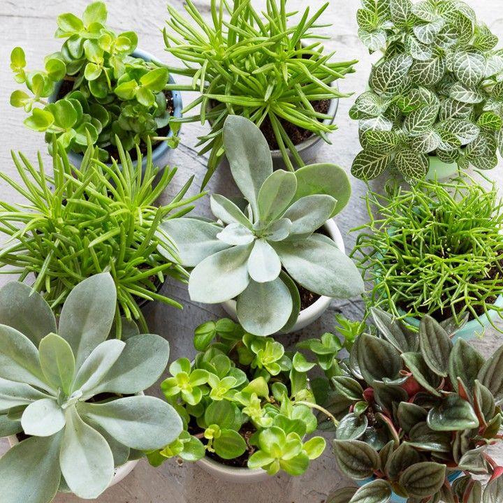 Mix en match met groen! #intratuin #herfst #miniplantjes