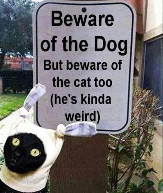 =^..^=  … Cat's Kinda Weird