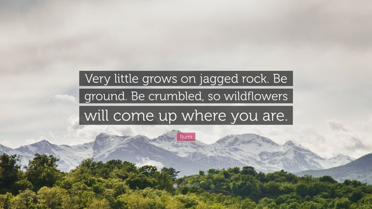 """Rumi Quote: """"Very little grows on jagged rock. Be ground. Be crumbled, so wildflowers will come up where you are."""""""