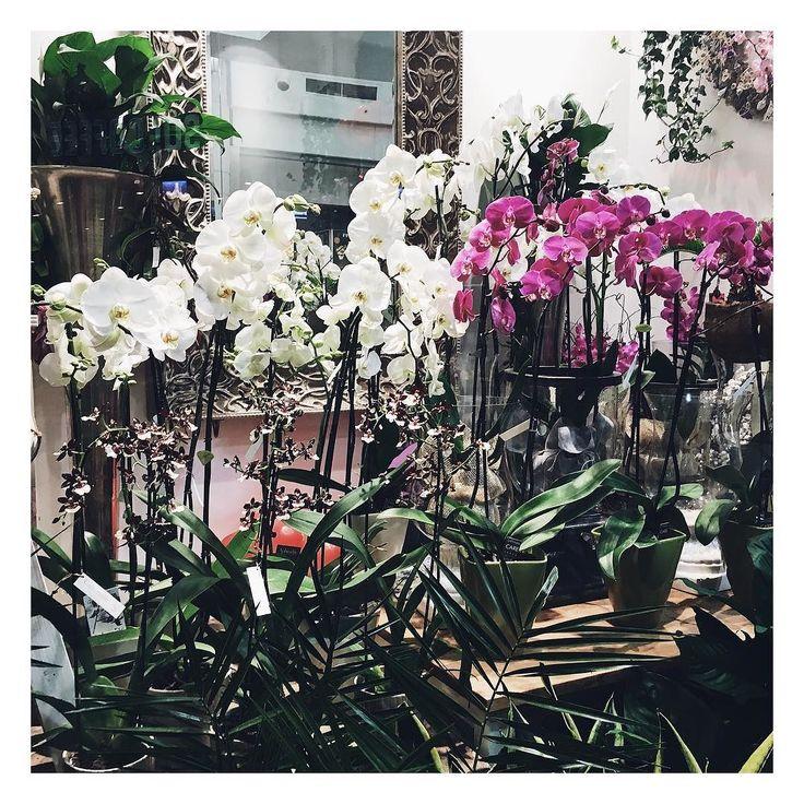 Dzikie nagromadzenie storczyków! Uwielbiam!  #floral #wild #florist #storczyk #orchids #orchidea