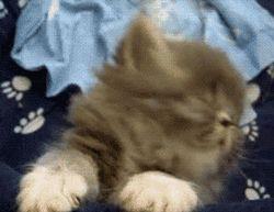 Gatito con sueño