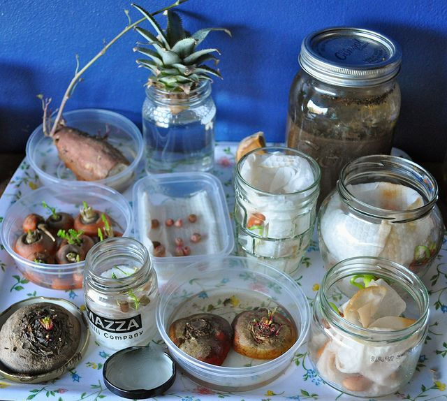 easy plants to grow in the classroom