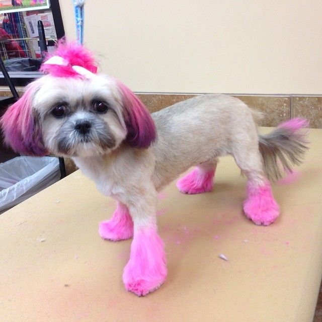 140 best Reasons I want to get dog hair color images on Pinterest