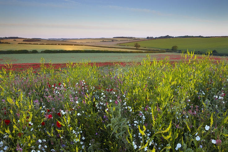 Norfolk Countryside - near Holt
