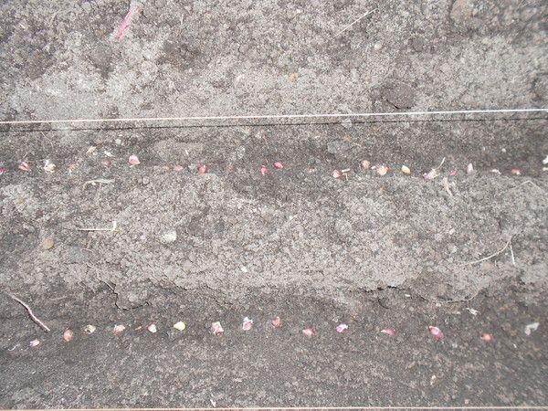 Чеснок и бульбочки (часть вторая).. Обсуждение на LiveInternet - Российский Сервис Онлайн-Дневников