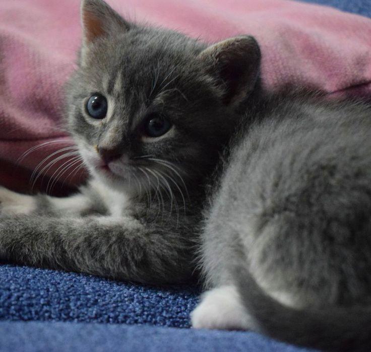 #cute animals#beautiful#cat#pandy#lovecat