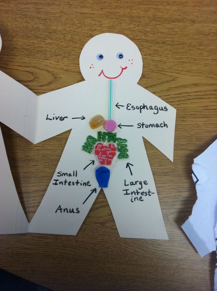 Used playdough to make the different parts: Digestive System