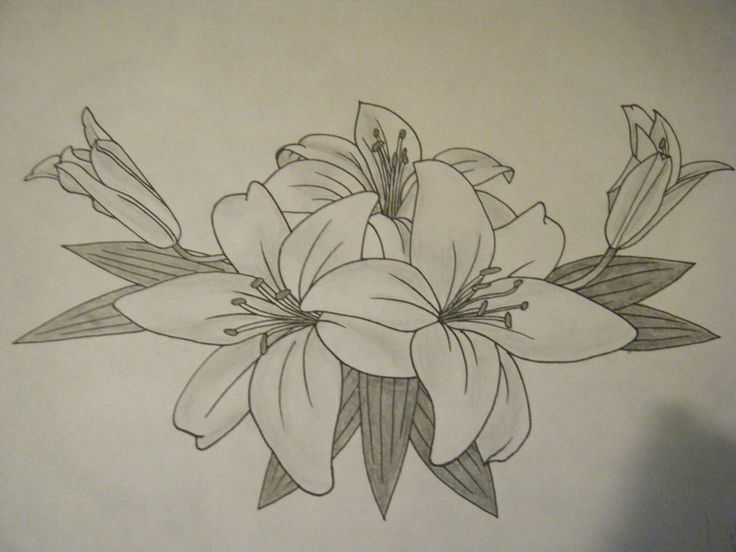 1000 ideas about lily tattoo design on pinterest lilies tattoo tiger lily tattoos and. Black Bedroom Furniture Sets. Home Design Ideas