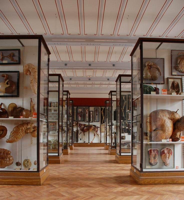 Le mus e fragonard de l 39 cole v t rinaire de maisons alfort val de marne - Musee fragonard paris ...