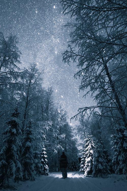 A Walk through the Snow, Trees and Stars ..... by Tiina Törmänen ♥ Seguici su www.reflex-mania.com