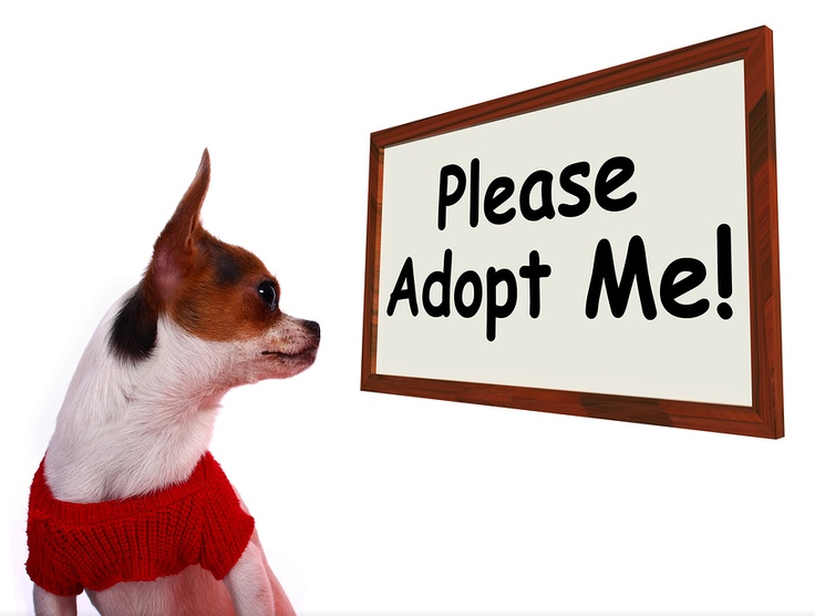 Animal Care And Control Of Dog Adoptions