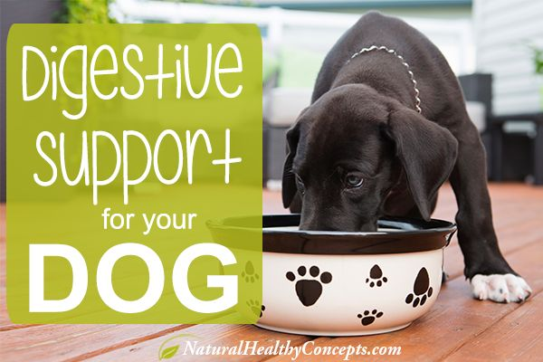 When your Dog has Diarrhea: How to Support Digestive Health