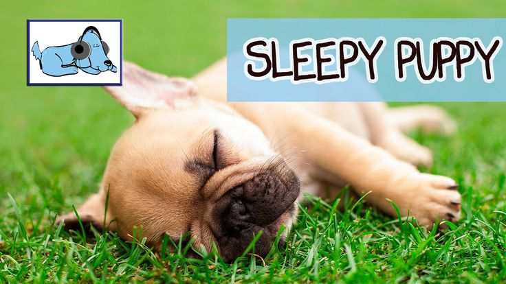 Help your puppy go to sleep at night with this 7 hour