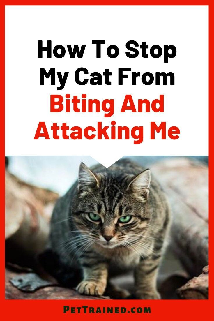 Learn Tips On How To Stop Your Cat From Biting And Attacking You See What You Are Doing Wrong And Learn How To S Cat Biting Cat Behavior Cat Behavior Problems