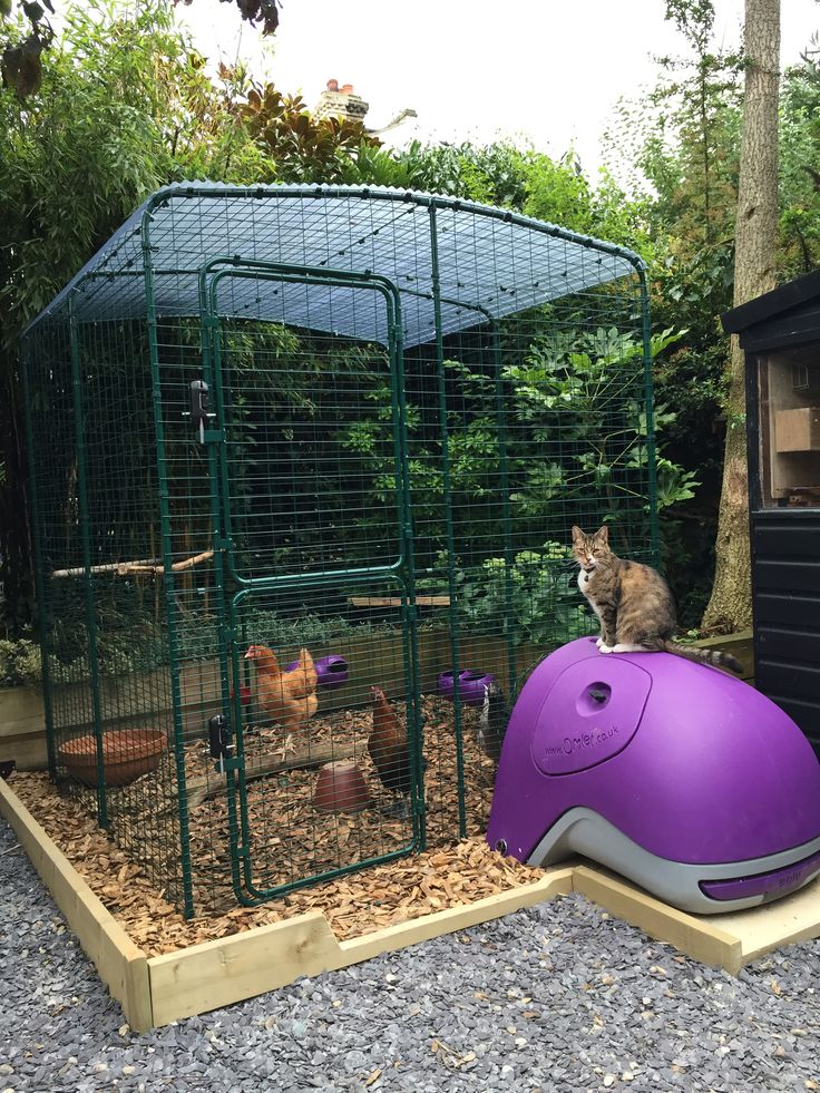 Best 25 chicken enclosure ideas on pinterest yard and for Chicken enclosure ideas