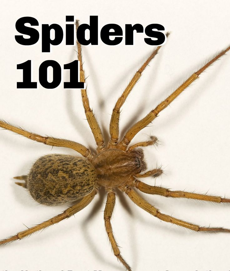 A guide to identifying common #spider species