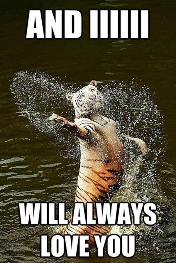 Funny animal memes pinterest - photo#20