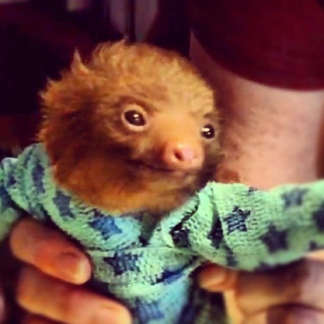6fc723a2a1 Baby Sloth In Footie Pajamas