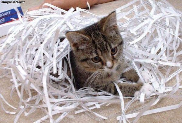 shredder cat