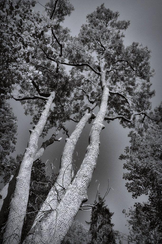 bwstock.photography  //  #trees