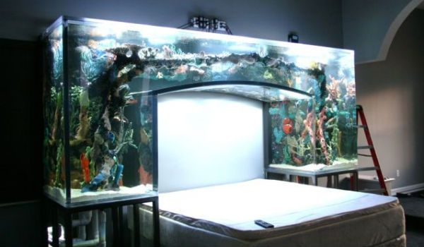 Found the toilet, found the sink, now a fishtank bed?! Uh forget reading on bed I could get lost looking at this!