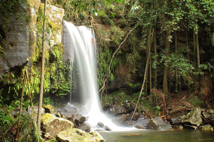 Majestic Curtis Falls - Mt Tamborine Australia [5184  3456] [OC]