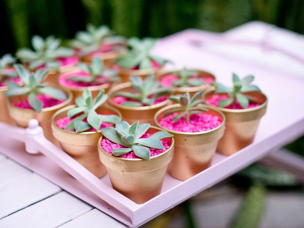 Succulent Party Favors - Desert Chic