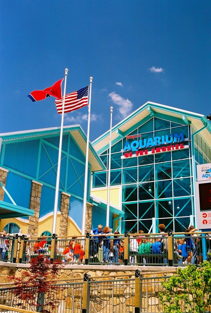 One of the most fun places to go in Gatlinburg! Your kids are going to have fun here! #gatlinburg #attraction