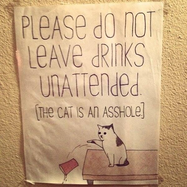 The cat is an asshole. OMG! My son leaves his drink on the table and the cat ALWAYS knocks it over! ugh!