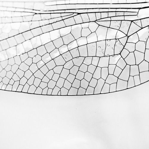 wow. insect wing.