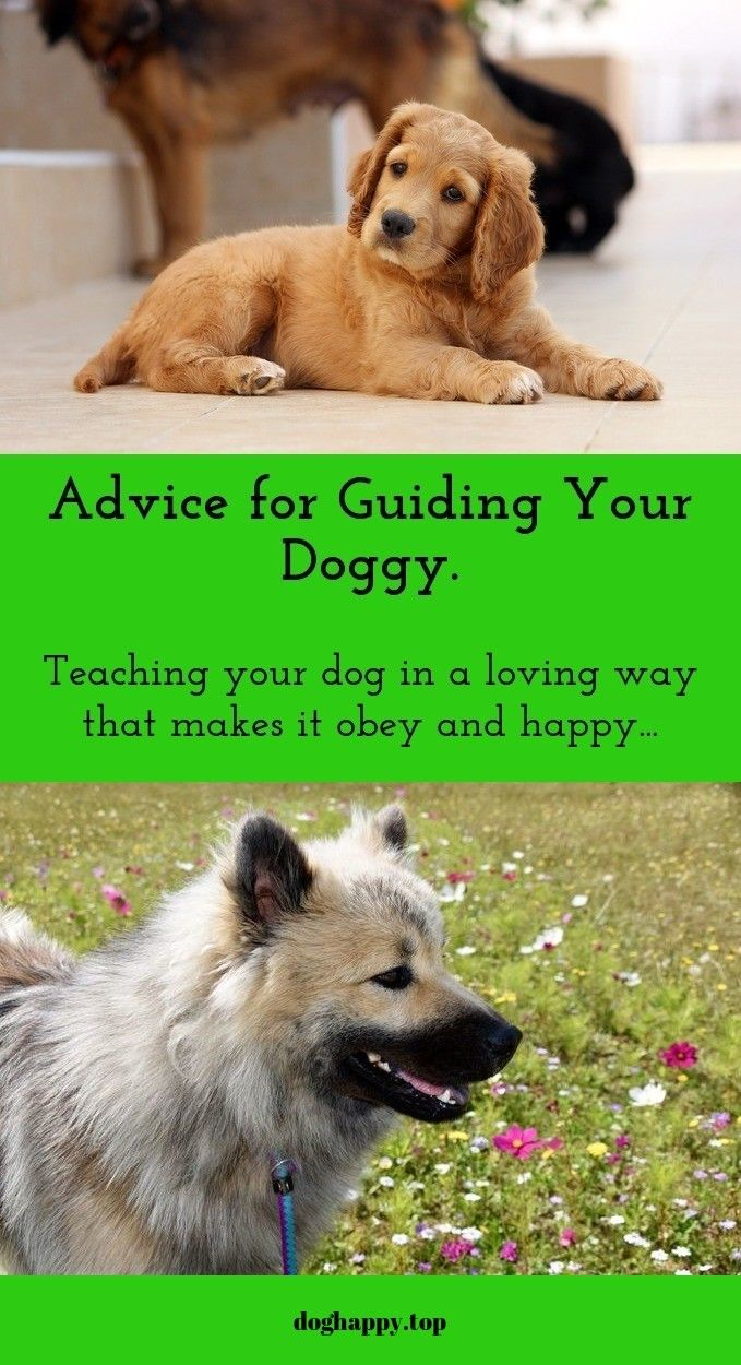 Dog Training Tips And Tricks For Beginners Dog Training Dogs