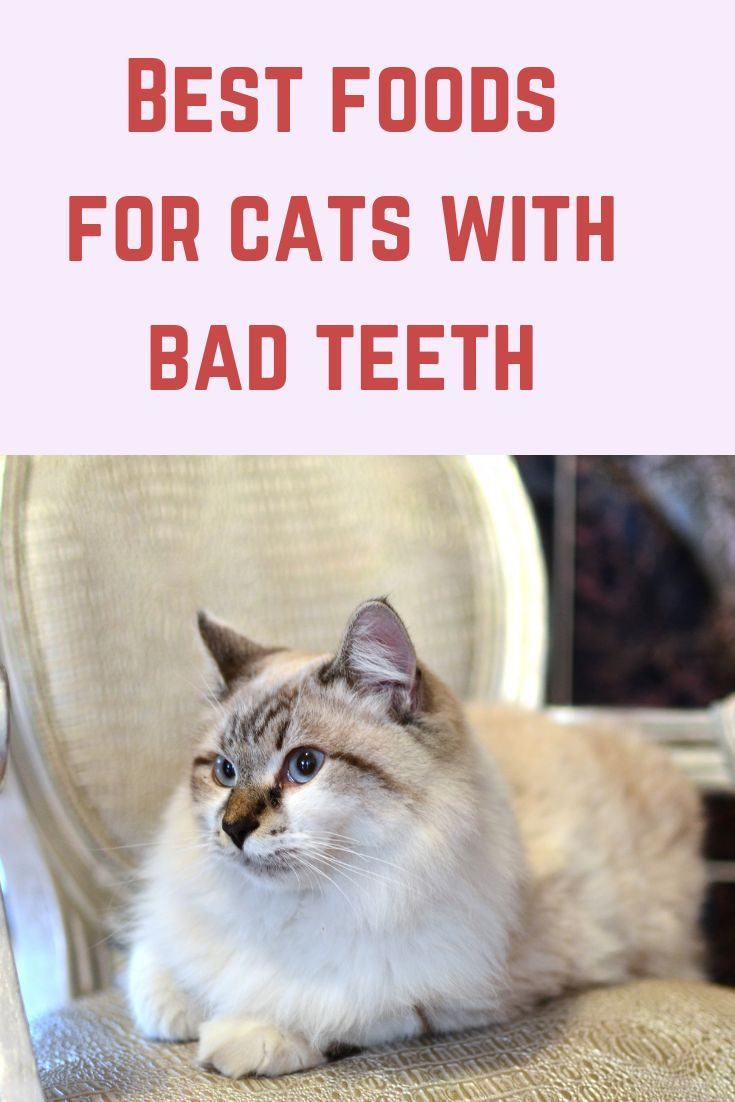 The Best Cat Food For Older Cats With Bad Teeth Bad Teeth Best Cat Food Older Cats