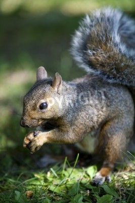 squirrel single women Aptly named momma squirrel,  but momma hadn't touched a single one when he came  turner pleads not guilty to complicity charges in murder of frankfort woman.