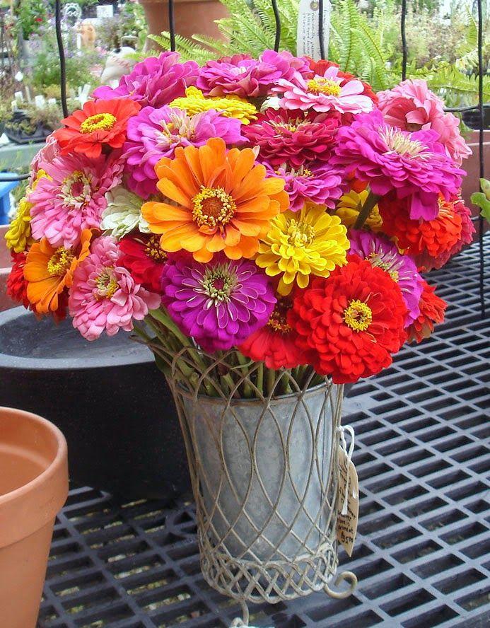 Beautiful Zinnia Wedding Bouquet 2014     Beautiful Zinnia Wedding Bouquets     Colorful Zinnia Flower Bouquets     Cool Zinnia Flowers B...