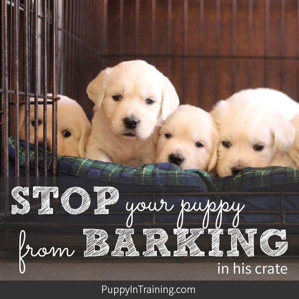 How To Stop A Puppy From Barking In His Crate At Night Kennel