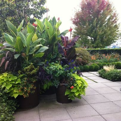 Potted elephant ear plant landscape pots and planters design ideas pictures remodel and - Tropical container garden ...