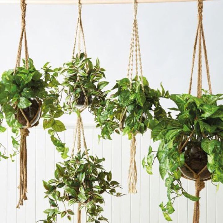 Why have hanging baskets? The question should be Why not?! Plus FREE SHIPPING on all homewares orders over $100.00 Australia Wide Metro area   Shop at keeki.com.au   If you love your home youll love keekï  T&Cs apply  #keeki #interiordecoratingservice #ifyouloveyourhomeyoulllovekeeki  #createyourperfecthome #stylingyourhome #couchthrows #outdoorliving #interiorsinspo #homeinspo #stylingyourhome #hangingplants #homestyling #homedecor #interior #fineinteriors