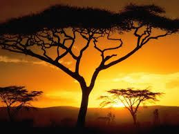 This sunset in Africa is so pretty.