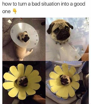 Pugget about it.