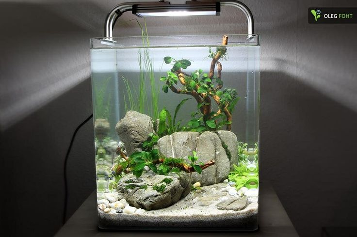 30 liter nano directly after set up aquascaping for Aquarium 30 litres