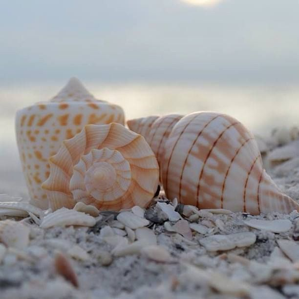 117 Best Images About Sanibel Birds/seashells//Sanibel In