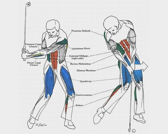 recipe: gym exercises for golfers [24]